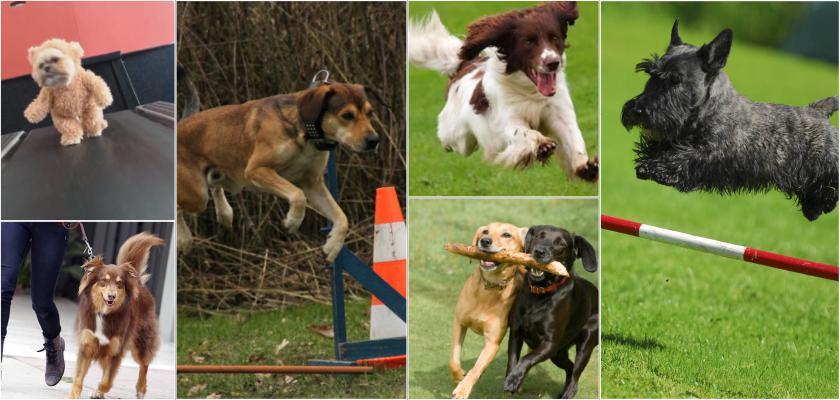 Köpeklerde Egzersiz Hareketleri Nedir?