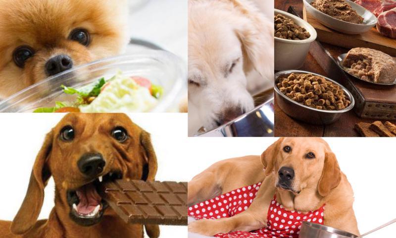 Köpeğiniz İçin Zararlı Yiyecekler Nelerdir